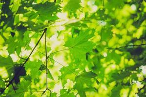 Vintage photo de fond abstrait de branches d'arbres verts