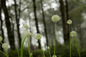belles fleurs. photo