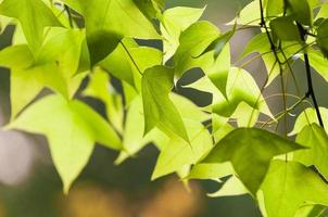 feuilles vertes photo