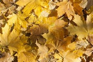 Feuilles d'automne feuilles d'automne colorées comme arrière-plan