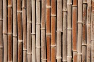 fond de clôture en bambou photo