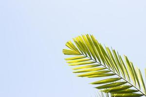 Branches de bambou de haie de feuilles de fougère de plantes tropicales sur blanc backgroun photo