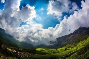 plantations de thé en Inde
