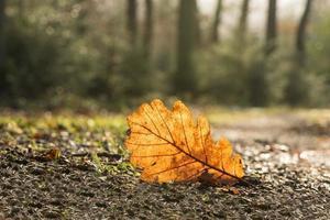 feuille d'automne orange sur le chemin photo