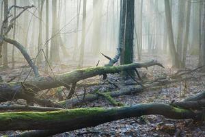 poutres de lumière sur bois mort