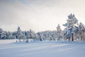 Ombres, tourbière de Krvemaa, Estonie photo