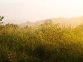 Champ d'herbe pendant le lever du soleil de la colline de Chaeng, Chiang Rai photo
