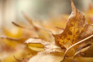 feuilles d'automne colorées