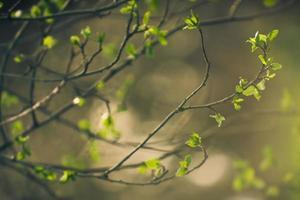 branche de bourgeons