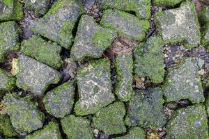 mousse verte sur le vieux mur de pierre.
