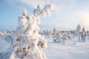 Frosty, tourbière de Krvemaa, Estonie photo