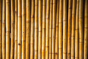 mur de bambou