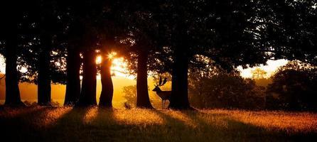 silhouette du lever du soleil photo