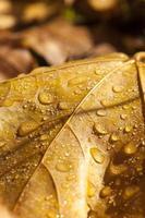 feuilles d'automne dans les arbres
