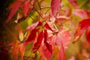feuilles rouges photo