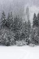 piste de randonnée dans la neige photo