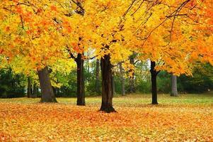 feuillage d'automne du Wisconsin