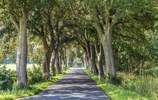 allée avec vieux chênes et vieille route à usedom