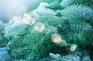 branches de pin photo