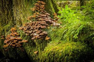 champignons sur arbre photo