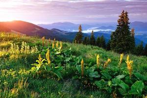 prairies de montagne photo