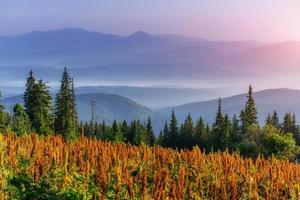 prairies de montagne