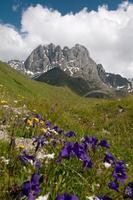 Montagnes du Caucase - groupe de montagnes chaukhi photo