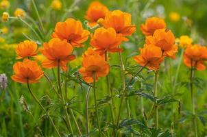 fleurs orange prairie montagnes