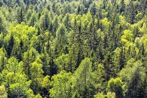 détail des arbres de montagne
