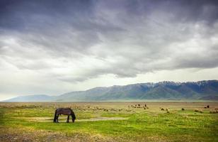 cheval dans les montagnes