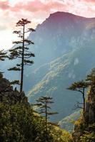 paysage de montagne avec des silhouettes de pins noirs et ciel orageux