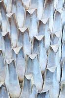 fond de tronc de palmier