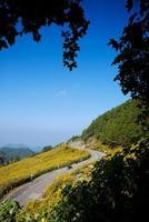 cabane dans la montagne photo