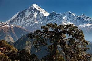 Dhaulagiri himal photo