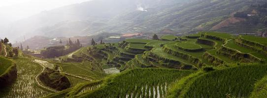 terrasse de riz sur la montagne photo