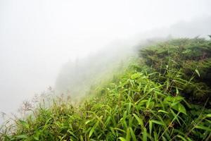 champ avec brumeux sur la montagne photo