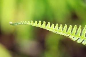 Frais jeune fougère vert vif avec goutte d'eau photo