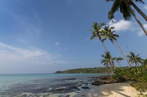 palmiers sur la plage de sable en thaïlande