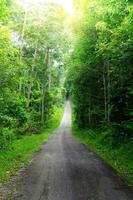 arbre vert et route dans les fores