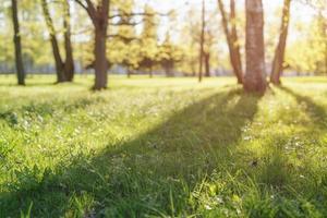 spectacle à faible angle dans le parc avec de longues ombres