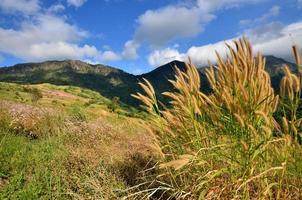 champs d'herbe sur la montagne