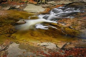 Cascade de la rivière dans la forêt de montagne