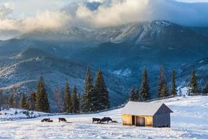 beau paysage d'hiver dans les montagnes photo