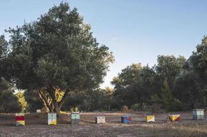ruches colorées photo