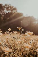 champ de fleurs aux tons chauds photo