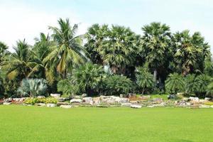 vue sur les palmiers photo