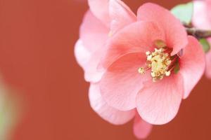 fleurs roses sur fond vintage photo