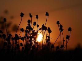 fond de nature abstraite d'été avec de l'herbe dans le pré photo