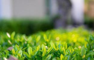 gros plan d'herbe verte avec la lumière du soleil