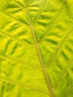 texture des feuilles photo